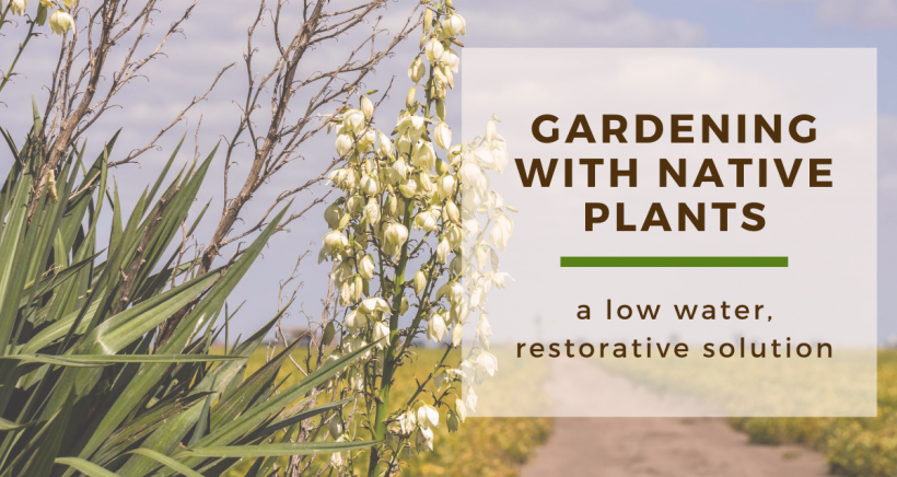 Gardening with Native Plants: A Low Water, Restorative Solution